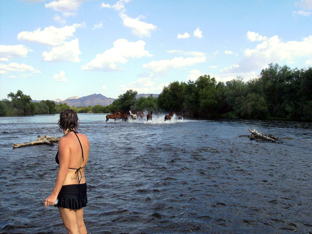 Wild horses didn't drag Jenny to the Salt River, but they helped her enjoy it more!